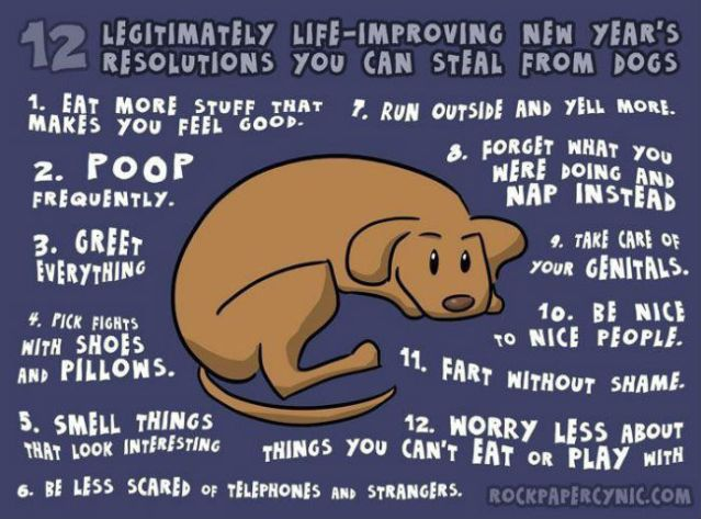 new-years-resolutions-you-can-steal-from-dogs