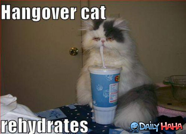 hangover-cat