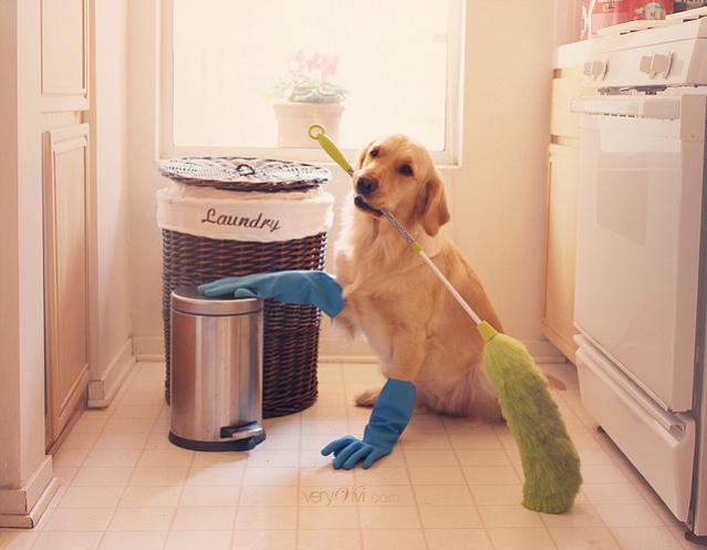 dog-cleaning-floor-house-chores-funny-sad-broom-gloves1