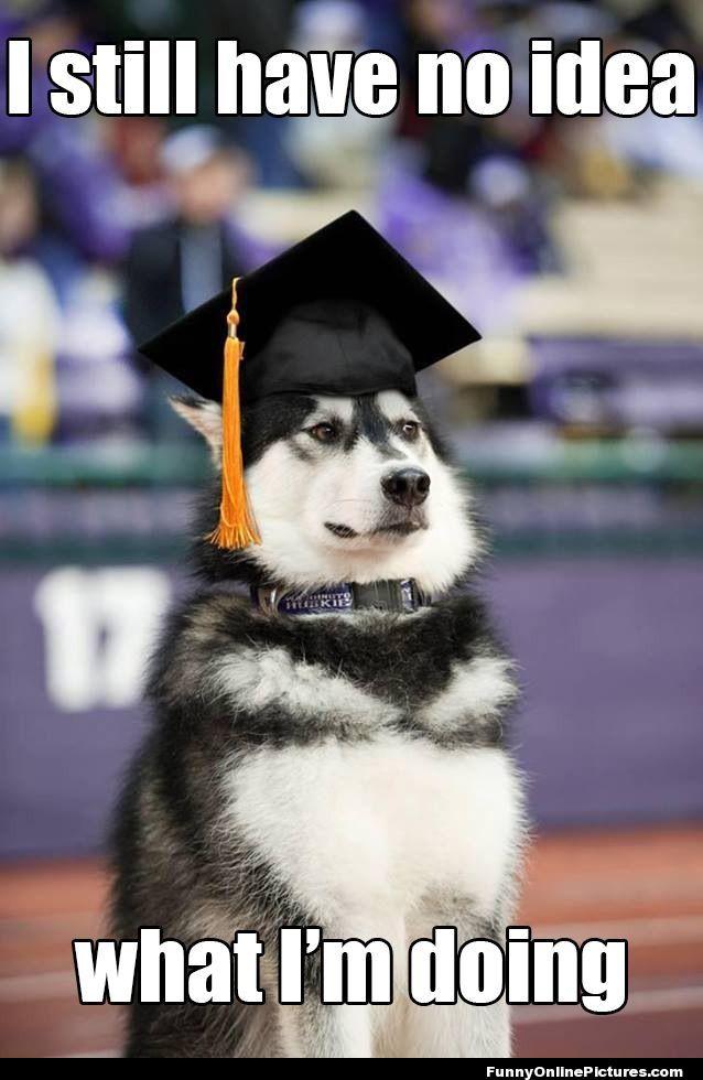 graduation-dog